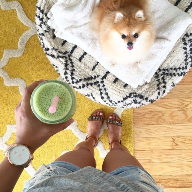 Home is where your Pomeranian is <3: White Roses, Pomeranians, Homes, Products, My, Friend, Rose Gold