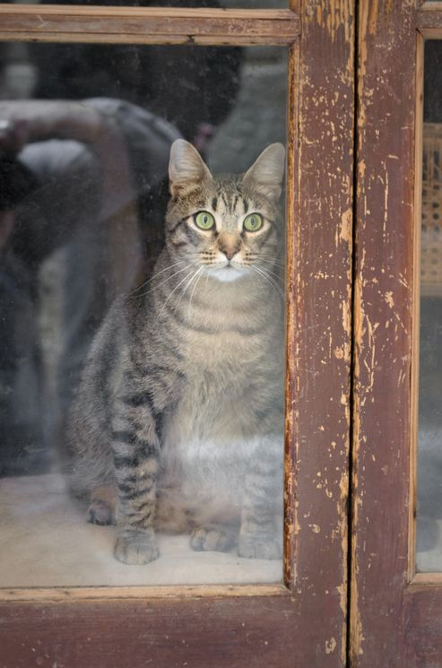 Ive found that the way a person feels about cats-and the way they feel about him or her in return-is usually an excellent gauge by which to measure a persons character  P.C. Cast: Cats Cats, Kitty Cats, Windows Doors Dogs Cats Etc, Cuddly Cats, Windows Ca