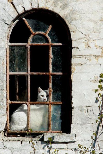Two of my favorite things... old windows & cats.: Beautiful Cat, Doors Windows, White Cats, Old Windows, Window Cats, Kitty, Animal