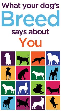 What Your Dog's Breed Says About You- definitely true about me owning a lab! :)