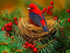 Winter garden ~ WOW!: Animals, Nature, Poultry, Color, Beautiful Birds, Photo