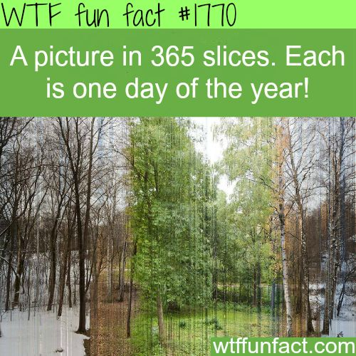 WTF Facts : funny, interesting & weird facts: Photos, Idea, 365 Slices, 365 Days, Art, Pictures, Year, 365Slices, Photography