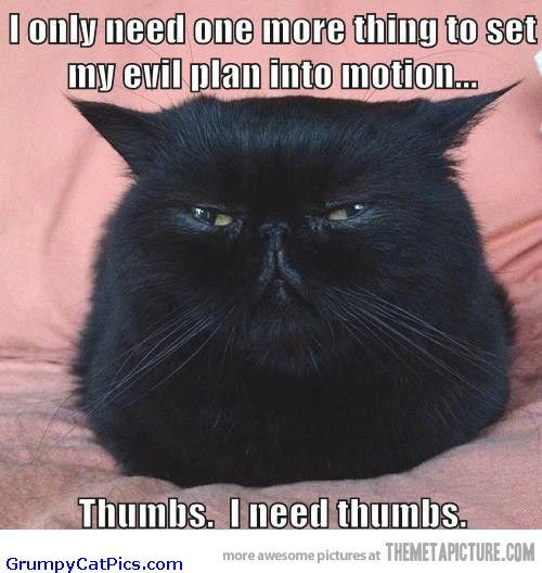 angry cat pictures with captions | ... Looks Evil And Angry Funny Picture - Funny Cats Pictures With Captions: Cats Pictures, Evil Cats, Funny Cat Pictures, Funny Pictures, Funny Cats, Angry Cat, Gift Cards, Angry Funny, Animal
