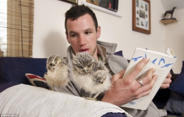 Baby owls Linford and Christie spend some quality time with caregiver Jimmy Robinson. (Photo courtesy of bnps.co.uk): Owls Linford, Babies, Animals, New Homes, Baby Owls, Orphaned Baby, Burrowing Owls, Photo, Owls Find