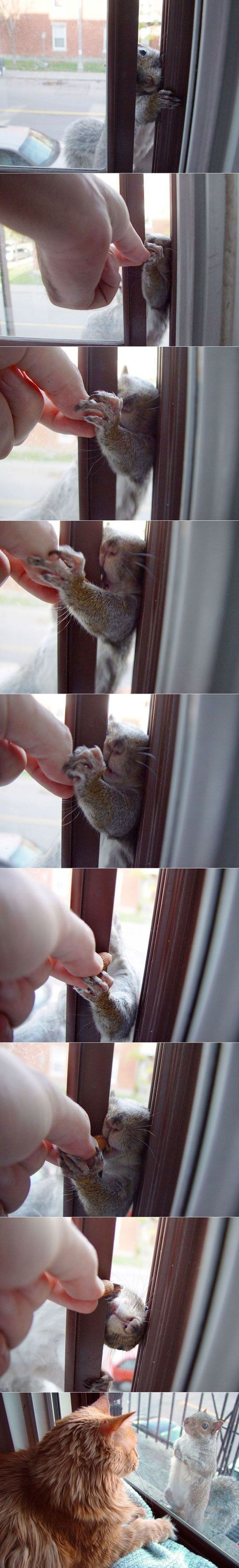 I adore the last picture.: Animals, Critter, Boo Cat, Funny Cats, Squirrels Chipmunks, Squirrel Friend, Squirrel Funny, Funny Squirrel Nuts Window