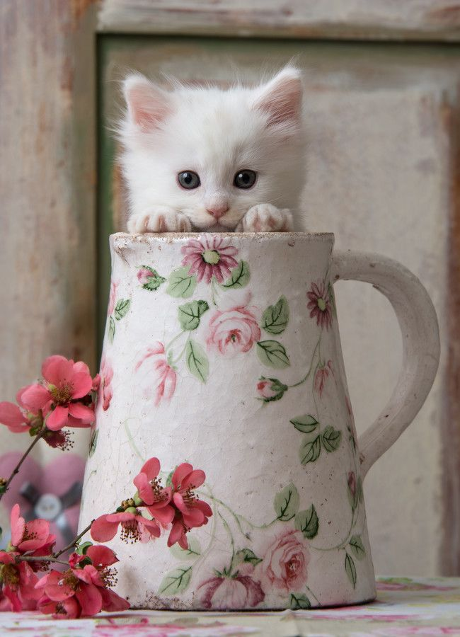 "I couldn't decide if this should go on my ""cute animals"" board (this one) or on my ""rose"" board, love it!: Kitty Cats, Animals, Sweet, Pet, Kitty Kitty, Kittens, Peek A Boo"