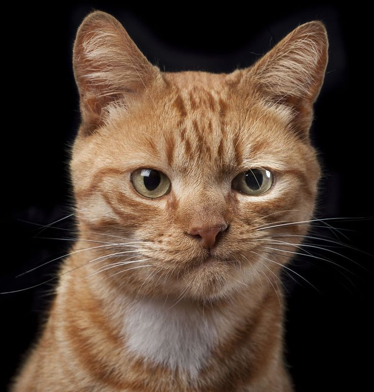 I made these photos throughout 2014 and plan to continue on this project with more animals of...: Cats, Face, Animals, Pet, Funny, Photo, Kitty
