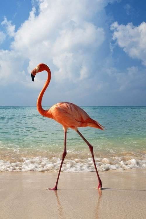 "my guardian angel - Flamingo  ""everyone has a guardian angel , you just have to ask them to show themselves"": Beaches, Animals, Pink Flamingos, Nature, Beautiful, The Beach, Birds, Photo"