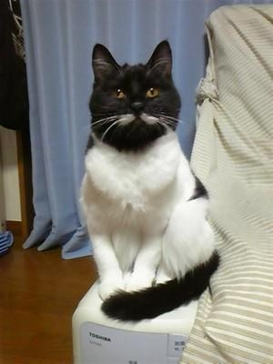 Such an unusual cat!: Kitty Cats, Beautiful Cats, Gorgeous Cats, Beautiful Kitties, Unusual Cat, Cats Cats Cats, Beautiful Felines, Jaden S Cats, Cats Big