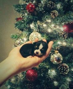 tiny Christmas pup: Puppies, Animals, Sweet, Dogs, First Christmas, Puppys, Adorable