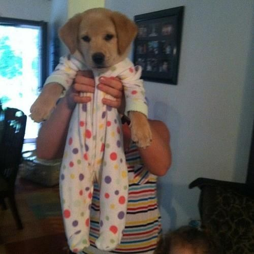 28 Pictures Of Golden Retriever Puppies That Will Brighten Your Day I want a goldnen retriever soo bad!!: Animals, Puppies, Dogs, So Cute, Pet, Funny, Puppys, Baby
