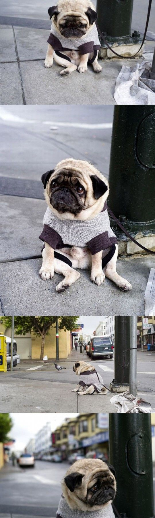 A Depressed Pug... look at that face!!!: Depressed Pug, Animals, Dogs, Pug Life, Pet, Funny, Pugs, Poor Thing, So Sad