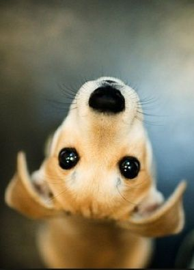 Aw, this dog is so cute!: Doggie, Animals, Sweet, Dogs, Puppy Dog Eyes, Pet, Puppys, Friend