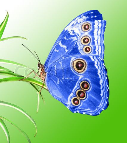 Beautiful butterfly: Beautiful Butterflies, Butterfly, Butterflies Dragonflies Moths, Blue Butterfly, Butterflies Insects