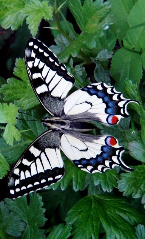 Butterfly Get Informed with Worthy Readings. http://www.dailynewsmag.com: Beautiful Butterflies, Butterfly, Butterflies Dragonflies Moths, Flutterby, Swallowtail Butterfly