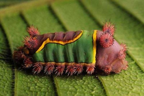 Caterpillar! It looks like he has a tiny sweater or something on!: Caterpillars Insects Etc, Butterflies Moths Caterpillars, Nature, Chenille, Creatures, Photo, Coat, Bugs Insects, Animals Bugs