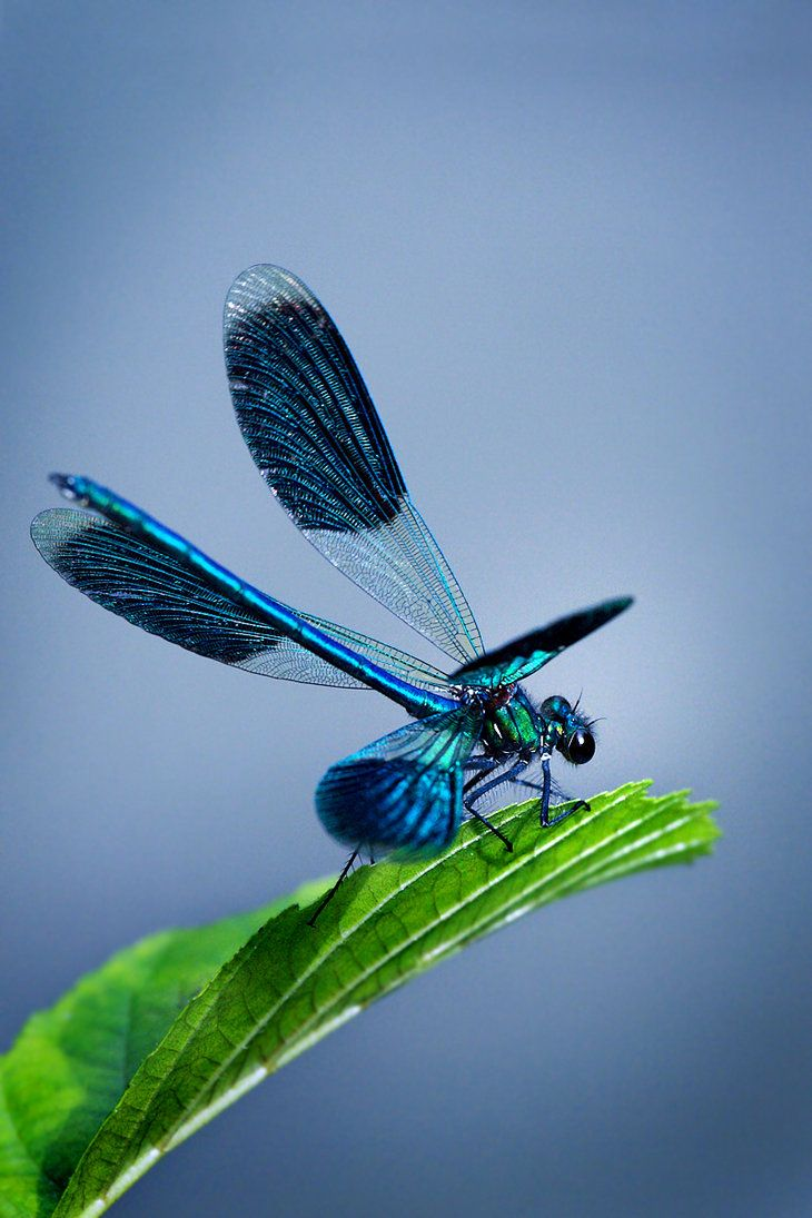 ✯ Dragonfly: Nature, Butterflies, Dragonfly S, Insects, Sewing Needle, Photo, Animal, Dragonflies