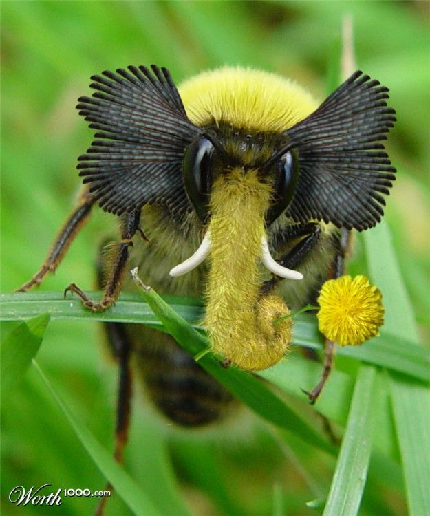 Elephant Bee, not sure if it's real, but it looks awesome.: Elephants, Bees, Elephant Bee, Butterflies Insects, Nature Amazes, Animal, Bugs Insects