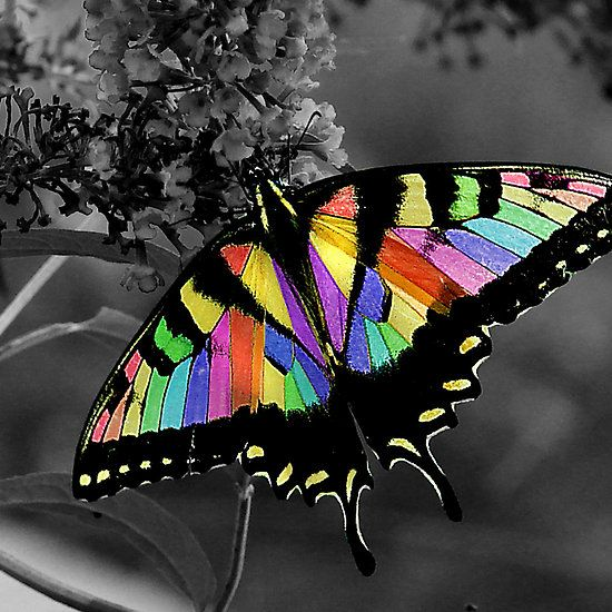 ~~Flutterby by Jamie Lee~~: Beautiful Butterflies, Butterfly, Flutterby, Color Splash
