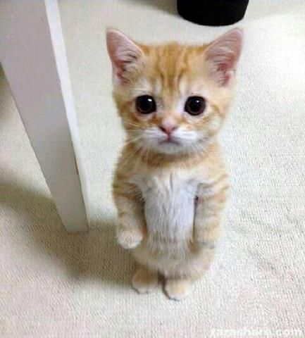 Haha this is adorable!!!: Cats, Kitten, Animals, Funny, Kitty, Real Puss, Baby Puss