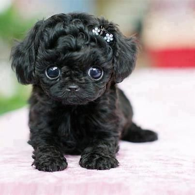 How adorable! #cute #puppy: Puppies, Cuteness, Dogs, Adorable Animals, Pets, Puppys, Box, Things, Eye