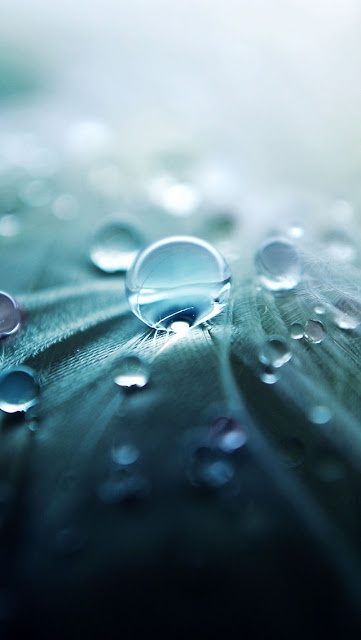 """Japanese colors 青竹色 aotake-iro: Japanese has many words for colors. This is """"Aotake-iro"""" and means """"bluish bamboo colors"""".: Macro, Water Drops, Nature, Wallpapers, Photography, Rain Drop"""