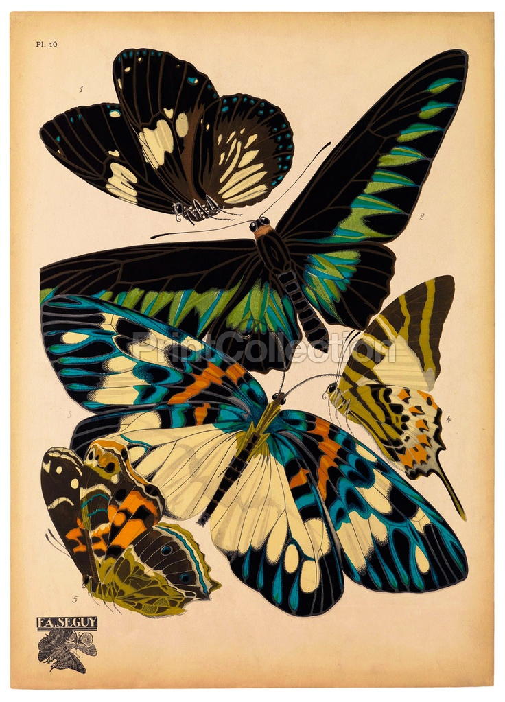Papillon, Butterflies Plate 10 | PrintCollection: Butterfly, Inspiration, Butterflies, Illustration, Art