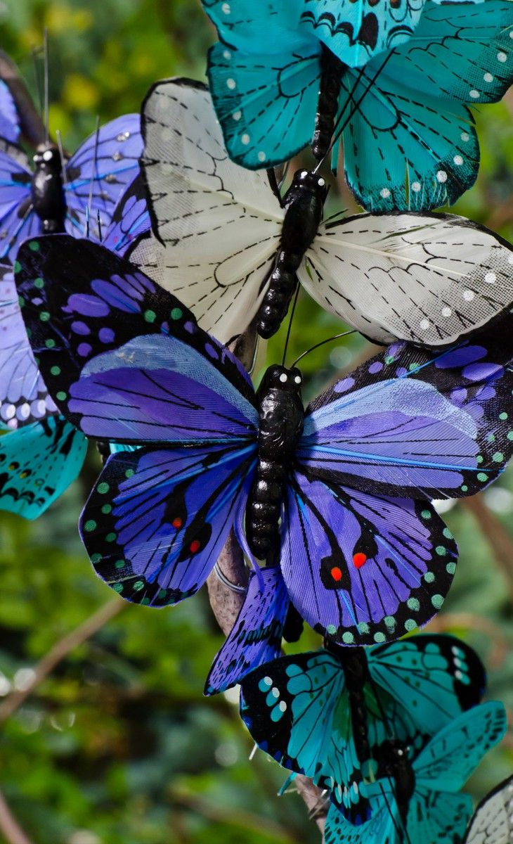 Pretty butterfly decor: Beautiful Butterflies, Blue Butterflies, Beautiful Colors, Blue Butterfly, Flutterby