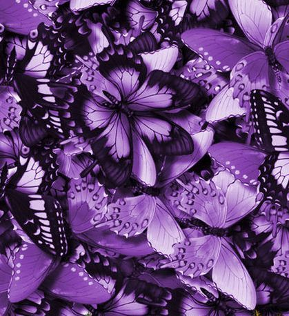 Purple | Porpora | Pourpre | Morado | Lilla | 紫 | Roxo | Colour | Texture | Pattern | Style | Form |: Purple Butterflies, Favorite Color, Purple Butterfly, Purple Passion, Things Purple, Color Purple, Purplebutterflies, Purple Thing, Purplepassion