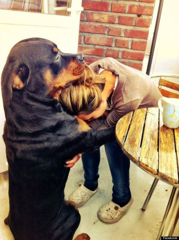 This is awesome .he is beautiful: Doggie, Animals, Dogs, Best Friends, Rottie, Pets, Puppy, Rottweiler