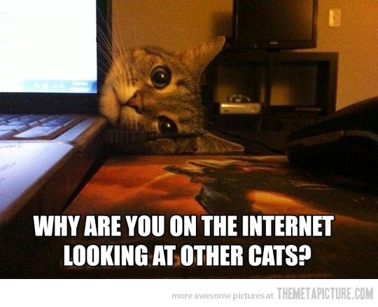 This is exactly what my cat does when I'm on the computer lmao or she trys to lay ON it!: Cats, Animals, Funny Cat, Funny Stuff, Funny Animal, Kitty, Cat Lady