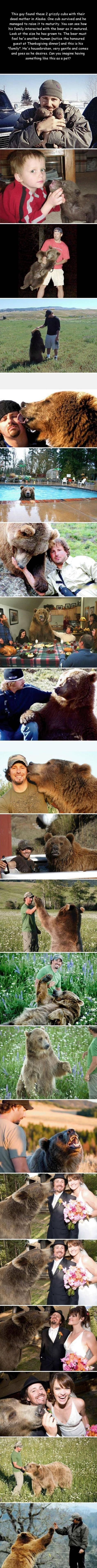 Amazing: Humanity Restored, Sweet, Adorable Animals, Guy, Wild Animals, Pet Bear, Grizzly Bears
