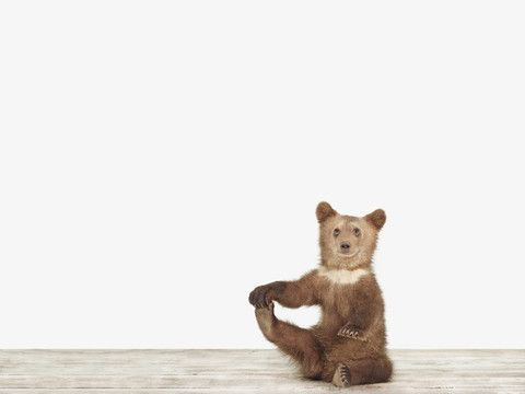 """Bear Cub No. 3 by Sharon Montrose for 20x200 Limited edition certified prints from $240 for 16""""x20"""". Order now--they're almost gone.: Animals, Stuff, Bears, Art, Sharon Montrose, Baby, Bear Cubs, Montrose 20X200, Photography"""
