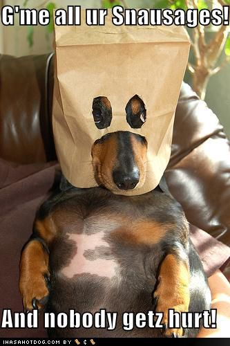 Little clown! :)  Never give a dog a pair of scissors, they have too much time on their hands.: Funny Animals, Sausage Dogs, Funny Dogs, Weenie Dogs, Funny Dog Pictures, Weiner Dogs, Wiener Dogs