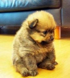 The only thing better than a puppy is a chubby puppy :)