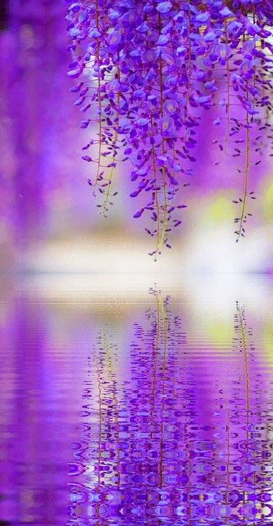 Wisteria reflection in Japan • photo: Jason on https://www.flickr.com/photos/thejbot/4580070394