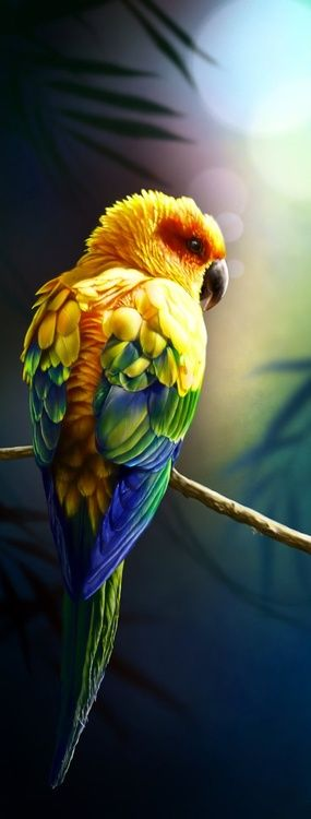 The Sun Conure Parrot ~ is a medium size brightly colored bird, native to northeastern South America. Parrots are among the most intelligent birds.: Sun Conure, Parrots, South America, Beautiful Birds, Animal