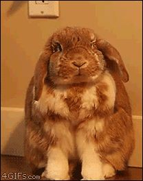 This bunny yawning more intensely than almost any other animal on earth. | The 33 Most Important Bunny GIFs On The Internet