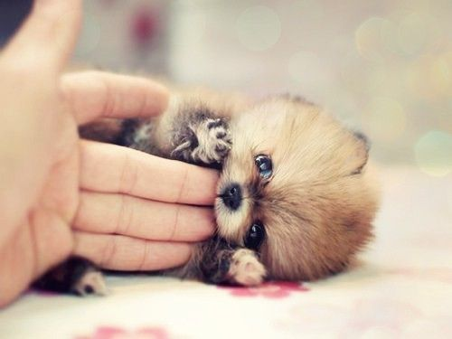 I might need this puppy...