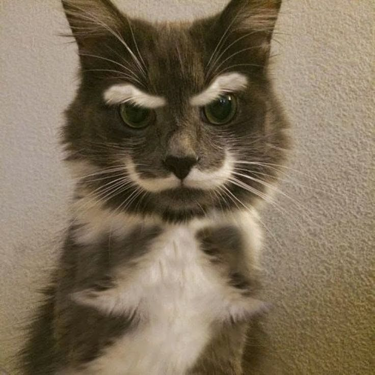 5 Pets With Extremely Strange Markings.  I think God does have a sense of humor and every now and again, one of His jokes comes along to keep us all amused.: Cats, Animals, Stuff, Funny Cat, Pet, Crazy Cat, Funny Animal, Mustache, Kitty
