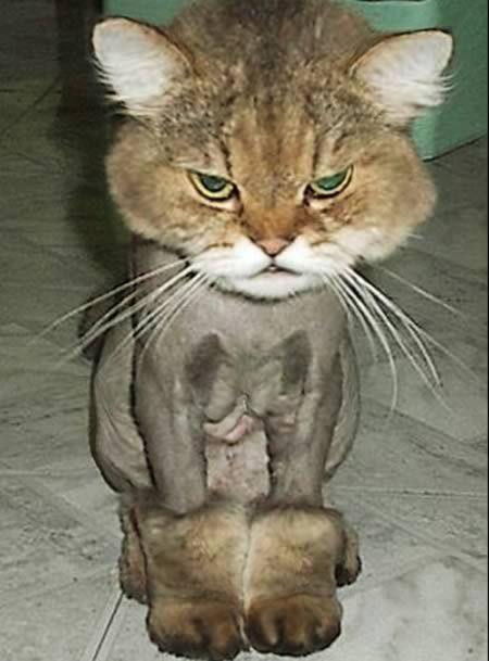 Boots with the fur....I tried to resist repinning this for about five minutes and then...I couldn't.: Cats, Animals, Funny, Poor Kitty, Funnies, Boots