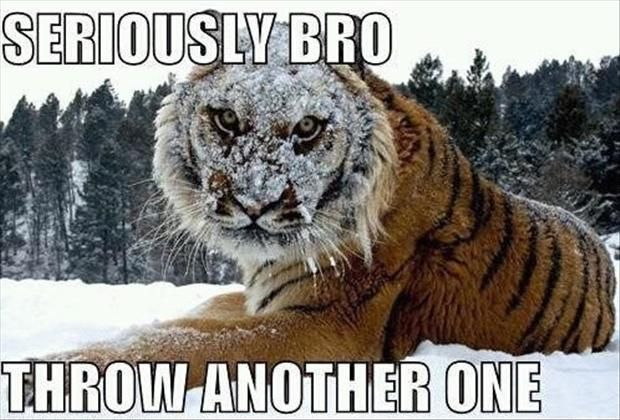 Funny Animal Pictures – 60 Pics: Cat, Animals, Funny Stuff, Funnies, Humor, Funny Animal, Tigers, Seriously Bro
