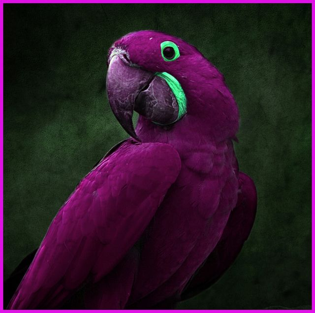 New Species Found !! by Steve - 1.25 Million+ (safe) views - thank you, via Flickr: Purple Bird, Color, Purple Passion, Beautiful Birds, Hyacinth Macaw, Animal