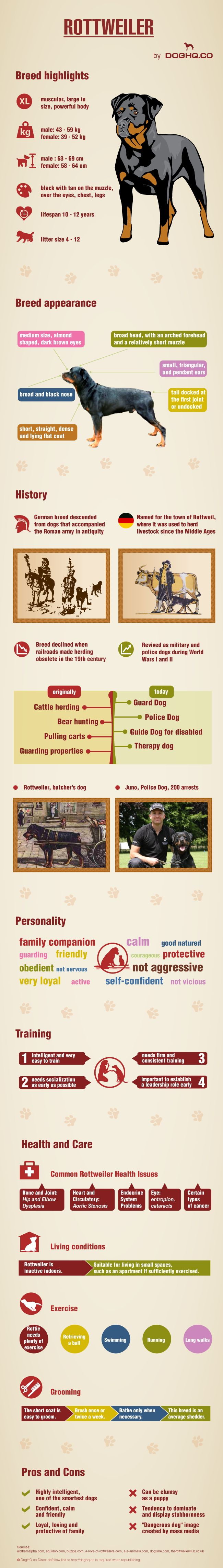 Rottweilers 101: Rottweilers 101, Rottie, Dogs Breeds Rottweilers, Rottweiler Facts, 101 Infographic