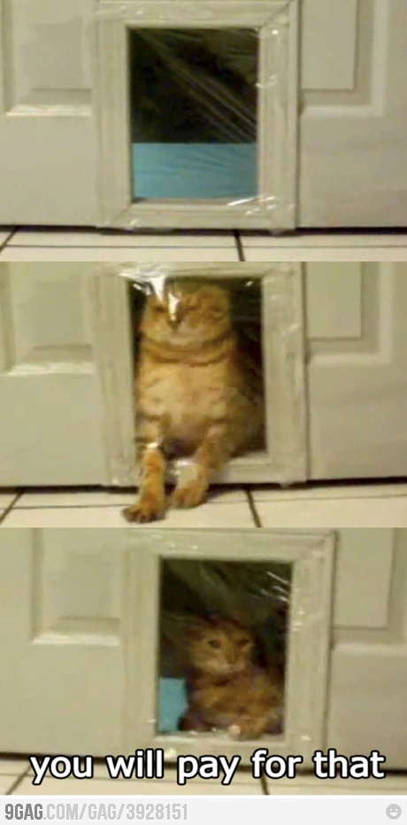 Trolling the cat: Cats, Giggle, Animals, Cat Prank, Funny, Poor Kitty, Funnies