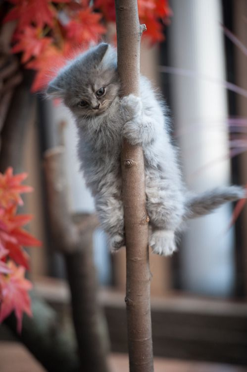 give me this kitty!: Cats, Kitty Cat, Animals, Tree, Pets, Kitty Kitty, Adorable, Kittens, Kitties