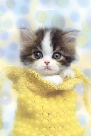 so sweet....this could be my Olivia: Kitty Cats, Animals, Sweet, Pet, Kitty Kitty, Adorable, Kittens, Baby