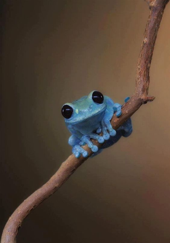 And frogs...omgracious FROGS. Anybody who knows me knows how I feel about frogs...