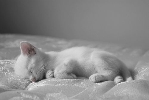 """A true cat lover cradles a kitten and knows that 9 lives will never be nearly enough."" --Author Unknown: Kitty Cats, Animals, Sweet, Sleepy Kitty, White Cats, Pets, Baby, Kitties, White Kittens"