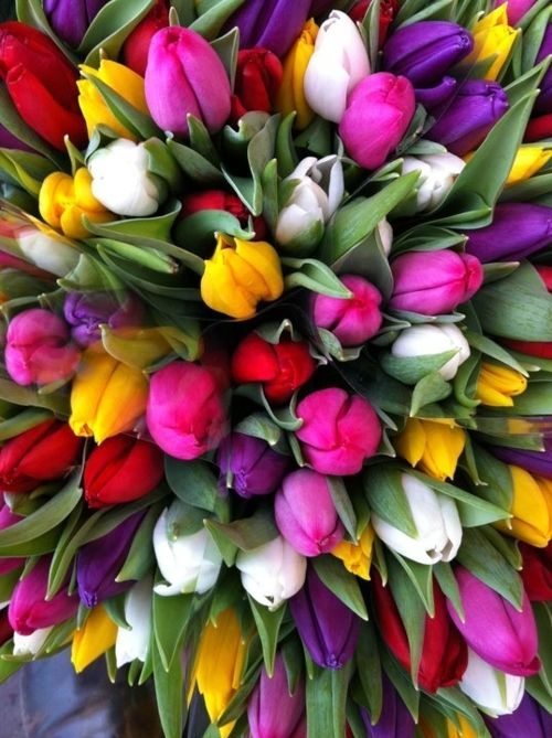 Gorgeous Time: Colour, Favorite Flowers, Colors, Beautiful Flowers, Flower Power, Tulips, Flowers, Garden, Spring